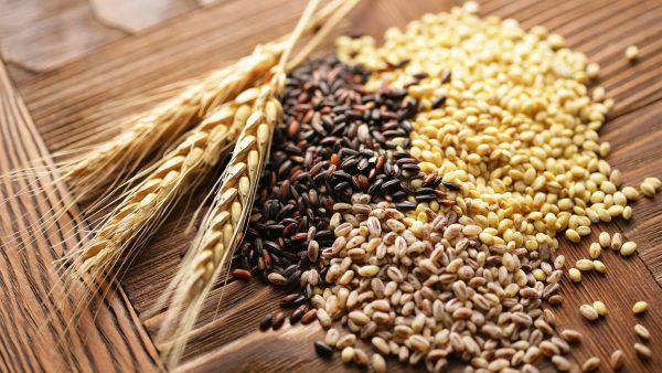 穀物が猫の体に悪いは大間違い!...