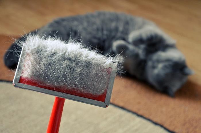 【主婦必見】猫の抜け毛に!便利なお掃除グッズ6選