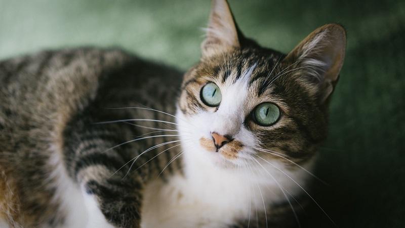 猫は食べ物の温度をどこで判断している?鼻やヒゲなの?