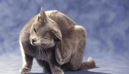猫のノミを駆除する方法!おすすめの予防と対策は?薬は病院でもらう方がいいの?部屋にいるノミを退治する方法もご紹介!
