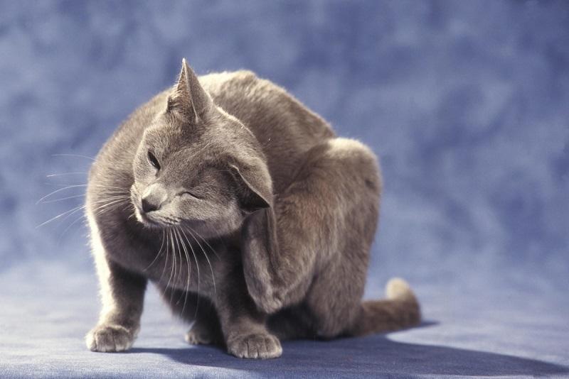 そもそも、猫にフケが出る原因とは?