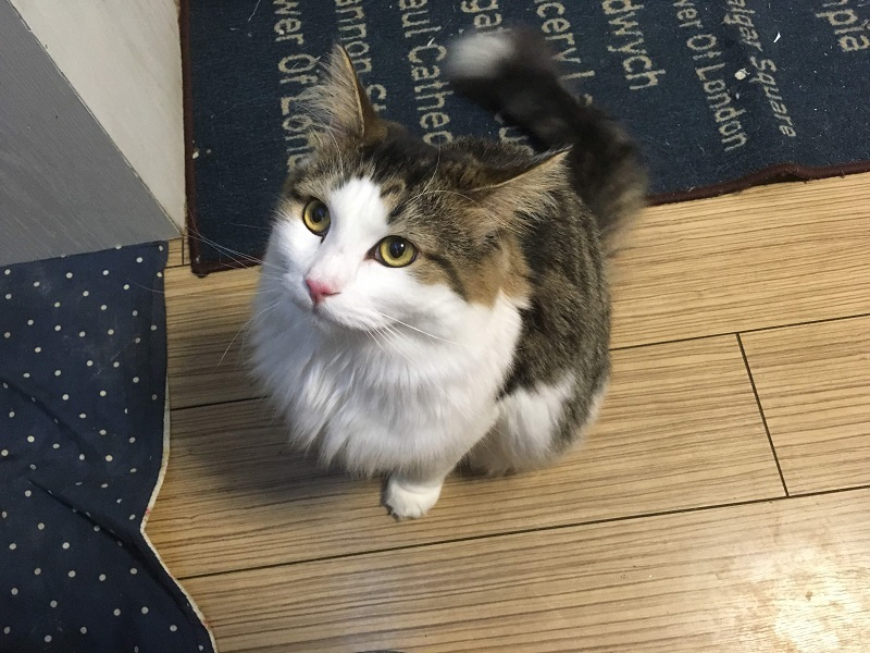 一人暮らしで猫を飼う時の『7つのデメリット』とは?