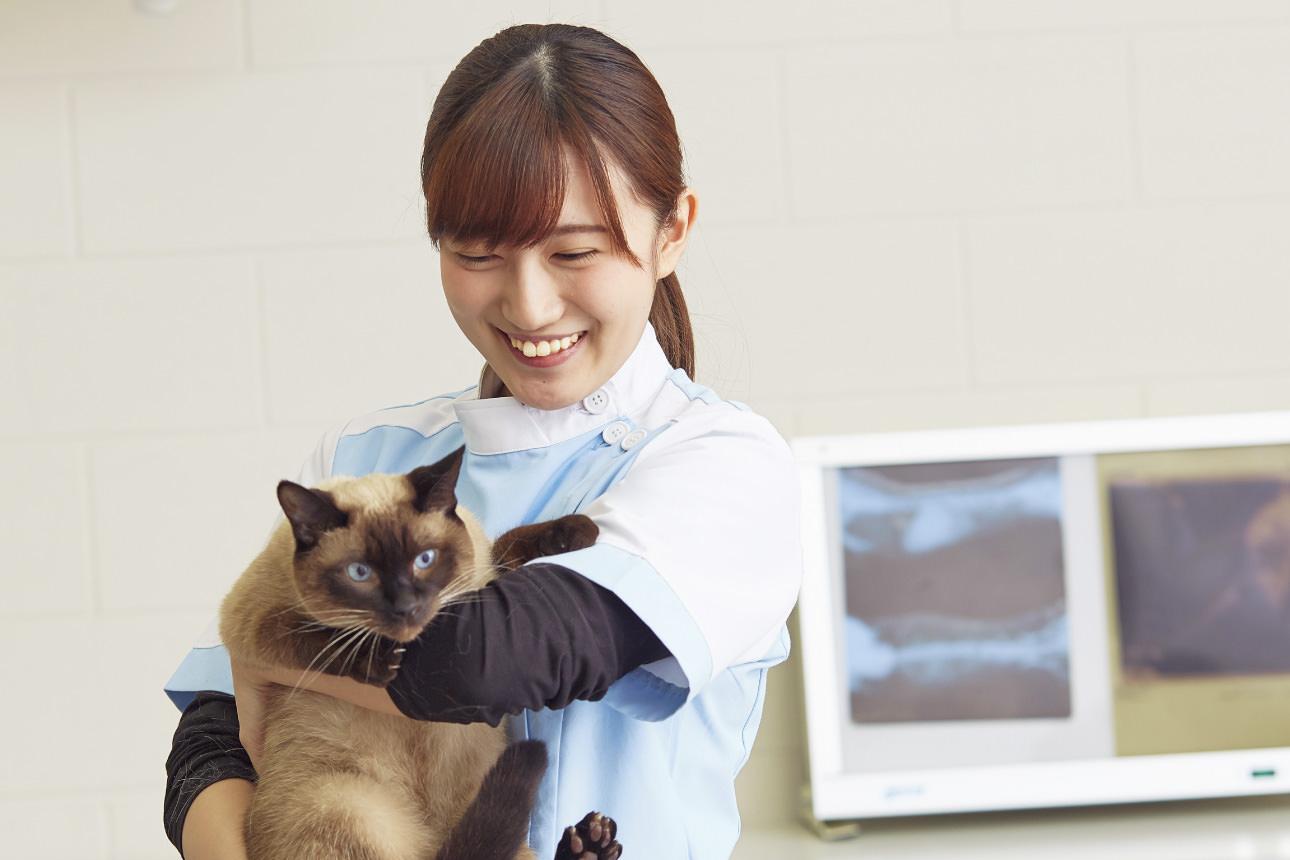 動物看護師が教える本当におすすめのキャットフード【ベスト3】