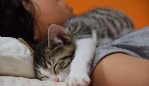 子供が猫アレルギーかも!?その症状と対策方法は?薬で治るって本当?子供が猫アレルギーかもと思ったらすぐに病院で検査してください!