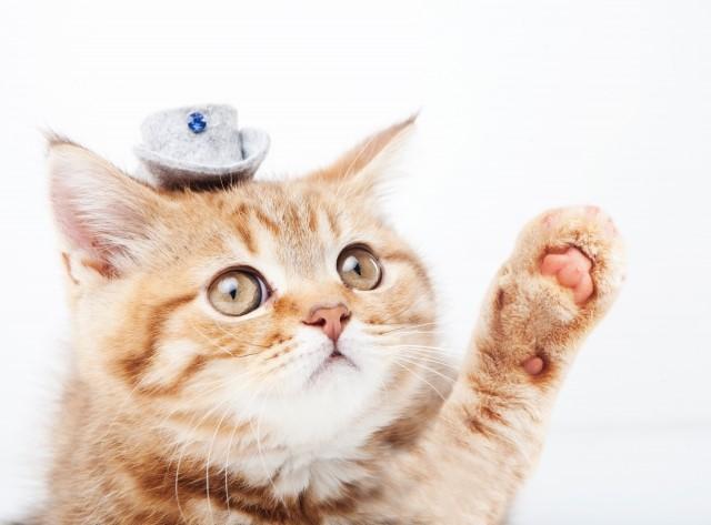 子供が猫アレルギーになった場合の対策法