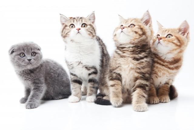 子供の猫アレルギーは検査した方がいいの?