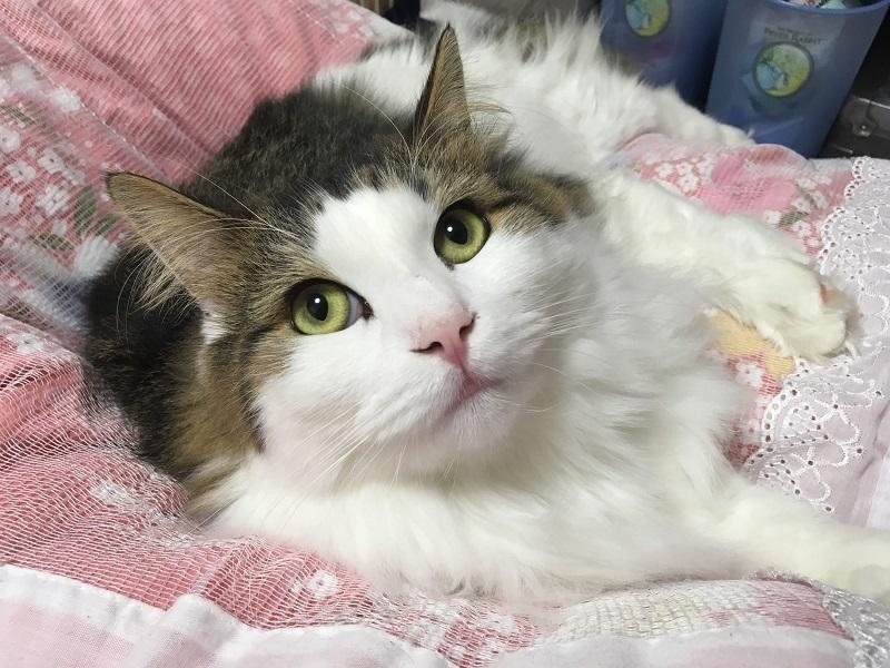一人暮らしで猫を飼う時の『4つのメリット』とは?