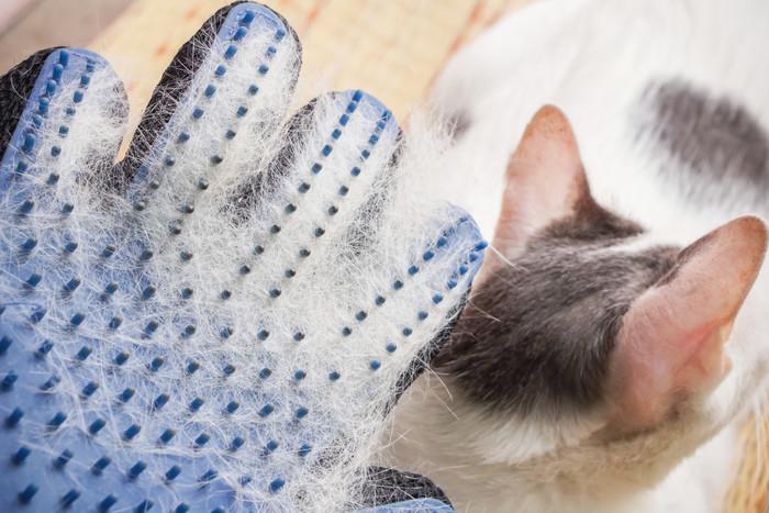 猫のブラッシング用のラバー手袋