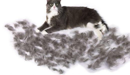 猫の抜け毛がすごい!おすすめの対策3選!時期や病気・ストレスが原因の可能性も!抜け毛対策におすすめブラシや手袋・空気清浄機もご紹介!