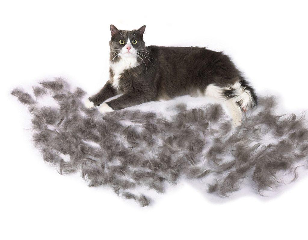 猫の抜け毛 空気清浄機
