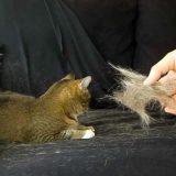 猫の抜け毛を簡単にお掃除する方法!便利なお掃除グッズ6選!