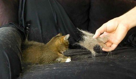【裏技】猫の抜け毛を簡単にお掃除する方法!便利なお掃除グッズ6選!主婦必見!厄介な猫の毛で汚れた部屋を簡単にキレイにする裏技大公開!