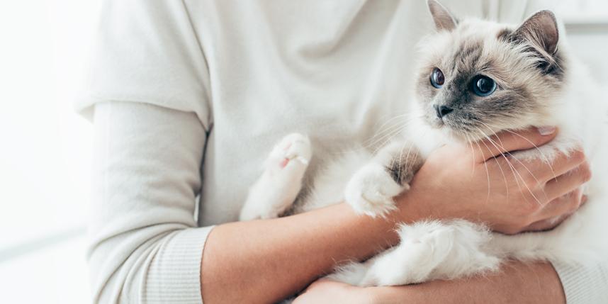 猫を飼う覚悟!猫を飼うと大変な理由と不安ならおすすめしない理由とは!