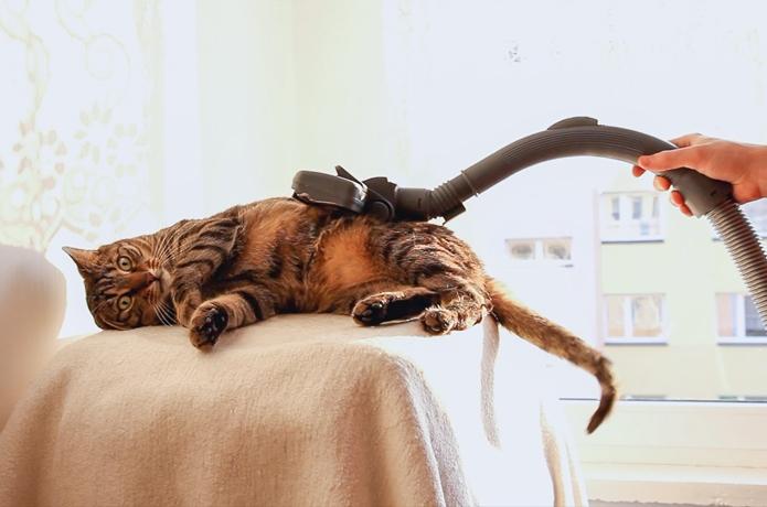 【主婦必見】猫の抜け毛を簡単にお掃除する裏技!