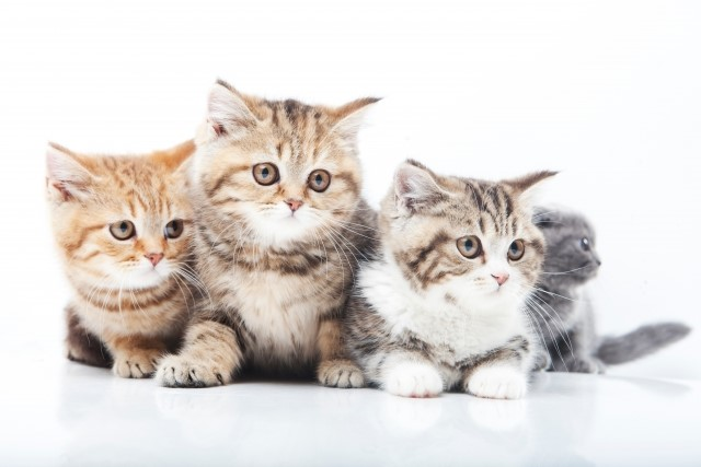 【初期費用】猫の飼い始めで『かかる費用』はどれぐらい?