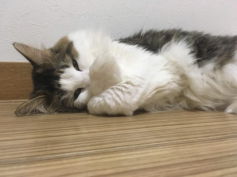 なぜ猫を飼っていると部屋が臭うの?