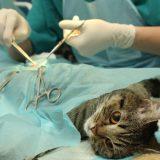 猫が去勢&避妊手術後の失敗