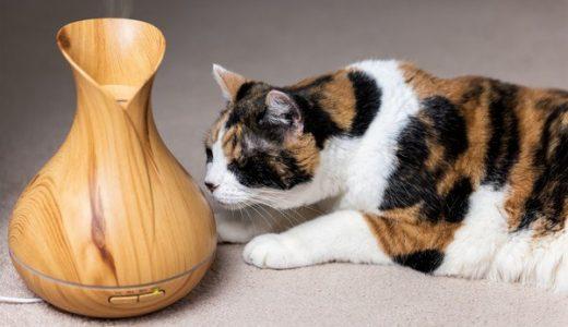猫に加湿器は必須?乾燥フケ対策に!アロマは要注意!おすすめ商品3選もご紹介!