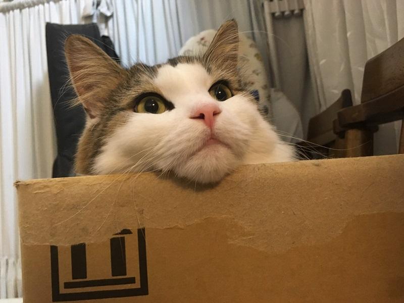 猫のいる部屋で加湿器を使うときの注意点!抑えておくべきこととは?
