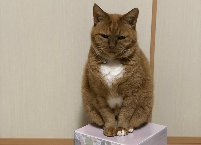 猫の去勢・避妊手術が遅いとどうなるの?