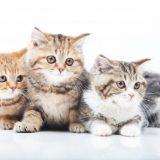 猫の去勢&避妊手術の時期や体重はいつまでが最適?遅い場合のデメリットとは?