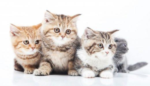 猫の去勢&避妊手術の時期や体重はいつまでが最適?遅い場合デメリットになることも!逆に去勢&避妊手術が早すぎても良くない理由とは?