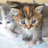 猫の去勢&避妊手術はしないと危険!手術をするメリット・デメリットとは?