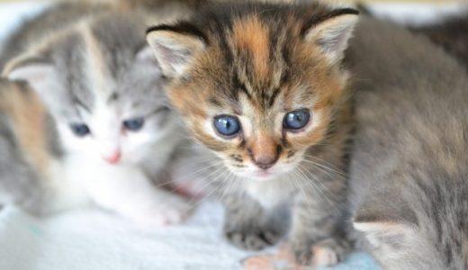 猫の去勢&避妊手術はしないと危険!手術をするメリット・デメリットとは?猫の去勢&避妊手術は病気の予防や健康寿命を延ばすことに!