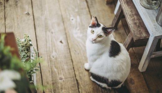 猫の発情期の期間はいつからいつ終わる?発情する時期と対策方法とは?オス猫・メス猫別に発情期の期間と注意点をまとめてみました。