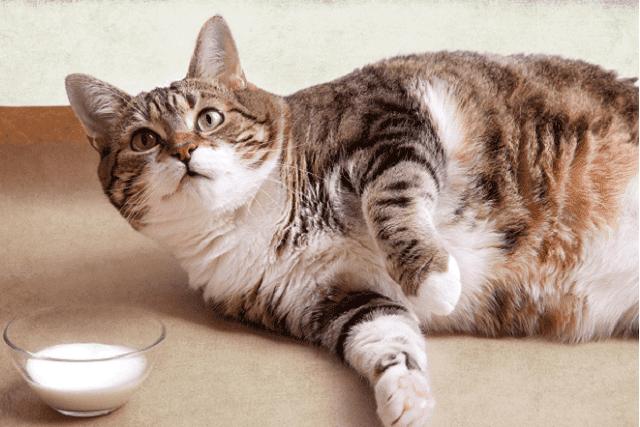 猫の避妊手術&去勢手術をする2つのデメリットとは?