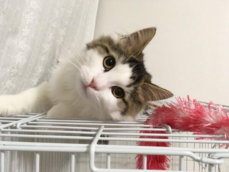 猫をゲージ飼いする場合の『3つのデメリット』