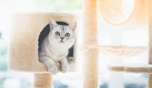 初心者必見!猫を飼う準備で必要な物&必需品を総まとめ!賃貸マンションの方も必見です。