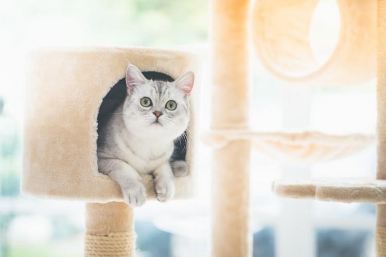 猫を飼う準備で必要な物&必需品を総まとめ!