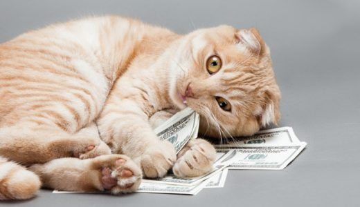 猫を飼う費用は総額100万円!?1ヵ月・年間・一生でお金がこんなにも!猫を飼うとかかる費用をワクチンや手術代・ご飯・生活用品まで解説!