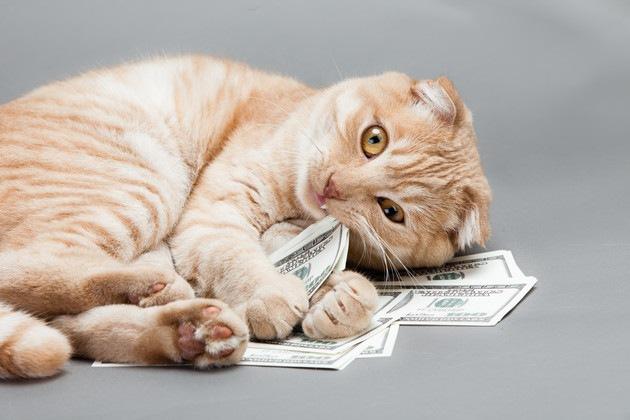 猫を飼う費用は総額100万円!?1ヵ月・年間・一生でお金がこんなにも!