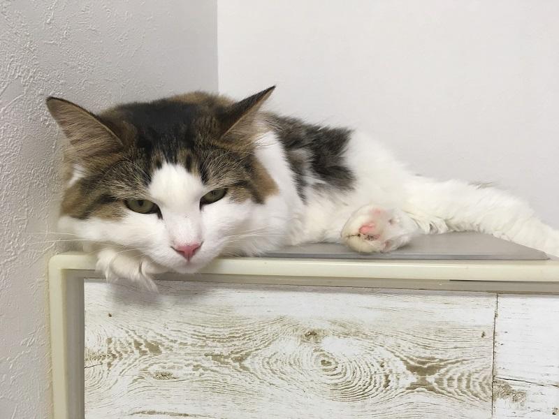 猫を飼う部屋は、狭くても大丈夫な理由とは?