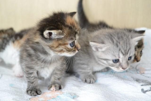 【子猫に多い病気】かかりやすい病気ランキング ベスト3