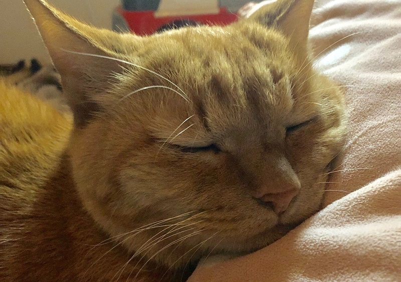 猫から人にうつる病気・感染症を知っておこう!症状や原因・対策とは?